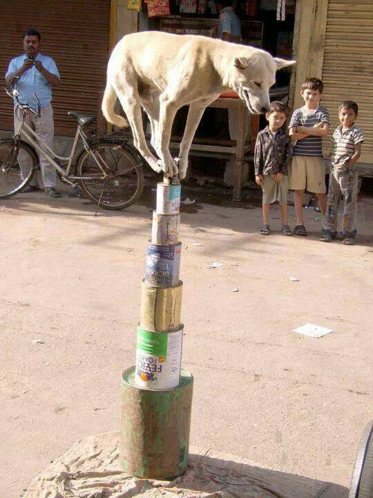 dog balancing on cans
